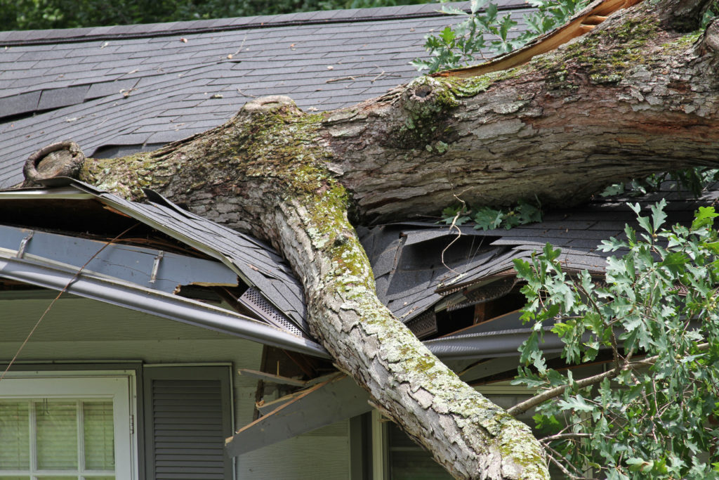 Image of severely damaged roof due to tree falling during storm.